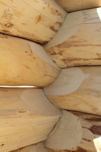 Green logs take 4-6 years to settle and form an air-tight seal.